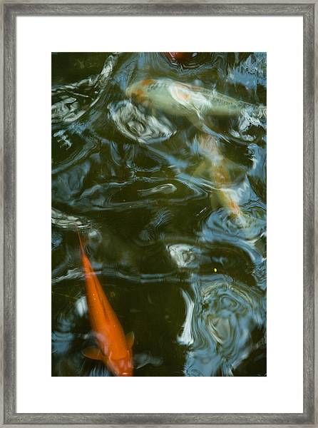 Framed Print featuring the photograph Koi II by Break The Silhouette