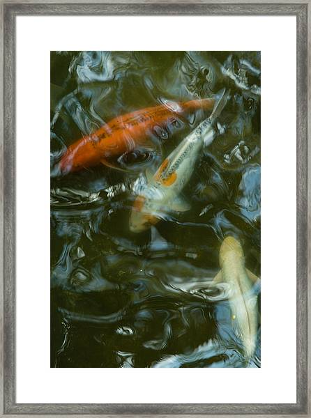 Framed Print featuring the photograph Koi IIi by Break The Silhouette