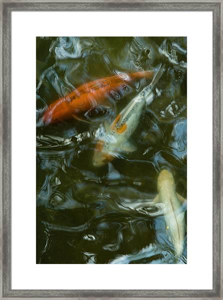 Koi IIi Framed Print