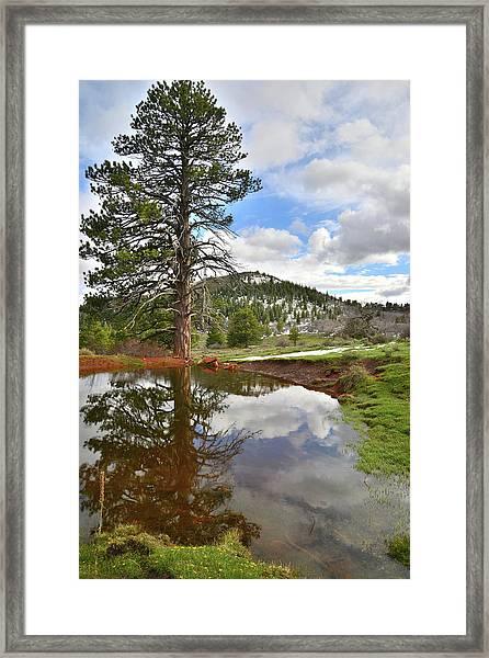 Kolob Reflection Framed Print