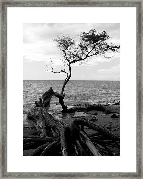 Kona Coast Tree Framed Print