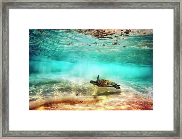 Kua Bay Honu Framed Print