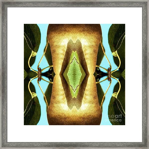 KV5 Framed Print