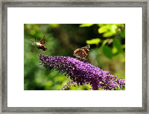 Lady And The Moth Framed Print