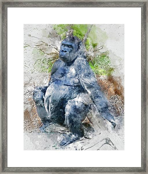 Lady Gorilla Sitting Deep In Thought Framed Print