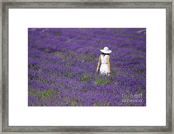 Lady In Lavender Field Framed Print