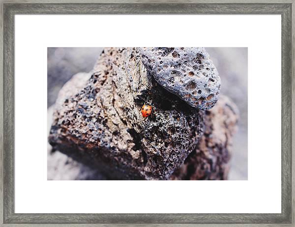 Framed Print featuring the photograph Ladybird  by Martina Uras