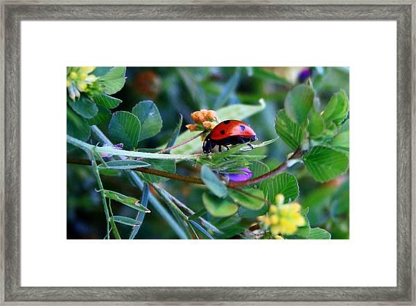 Ladybug Haven Framed Print