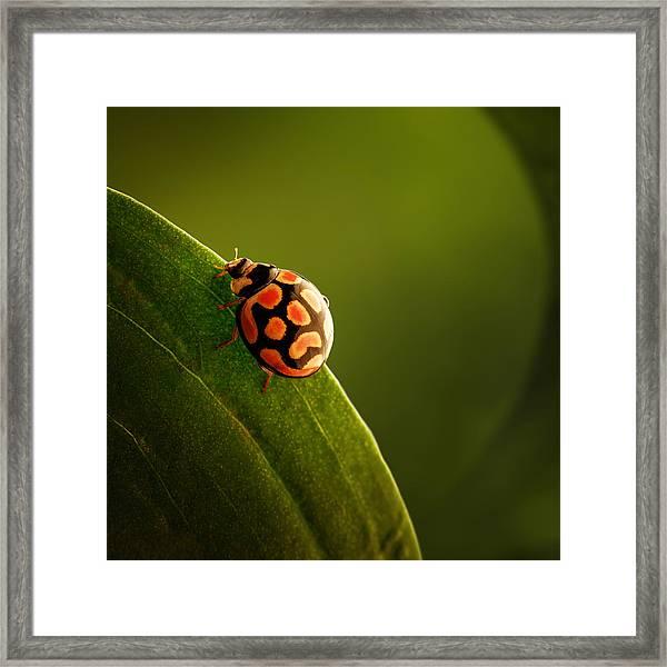 Ladybug  On Green Leaf Framed Print