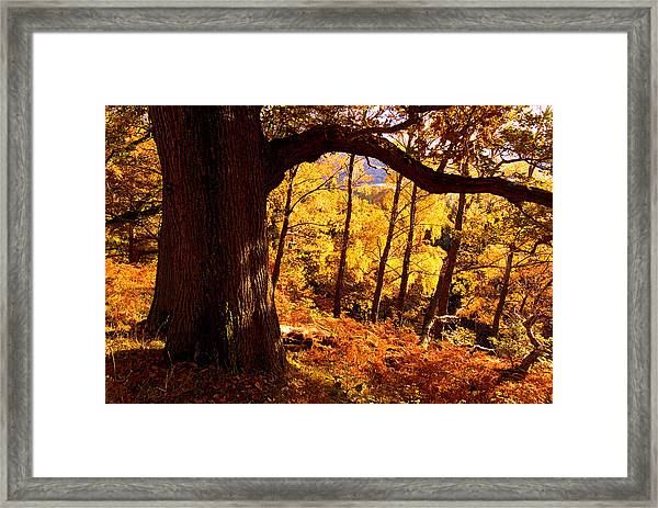 Lake District - Fall Colors Near Aira Force Framed Print by Dave Lawrance