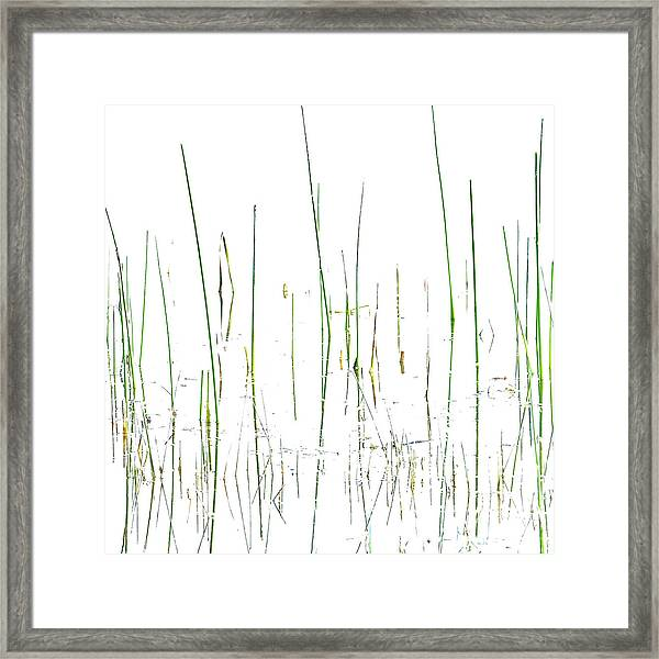 Lake Grass Framed Print