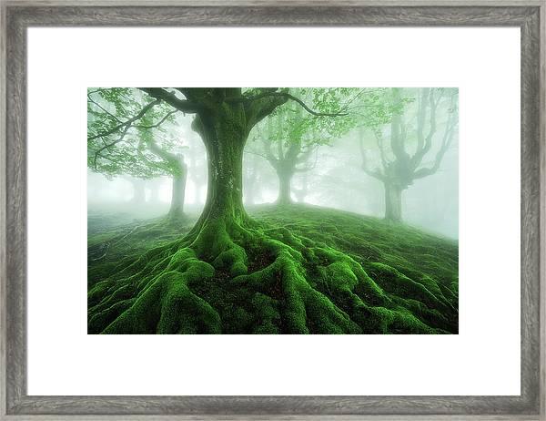 Land Of Roots Framed Print
