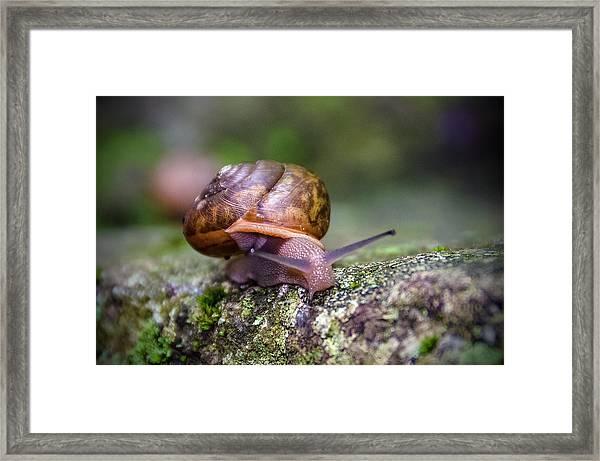 Land Snail II Framed Print