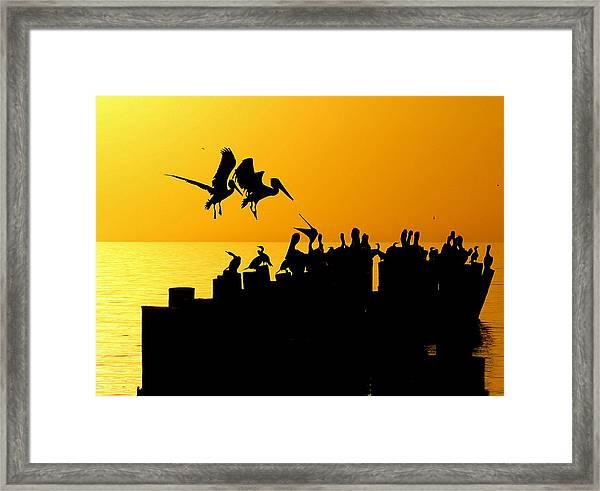 Landing In The Sunset Framed Print