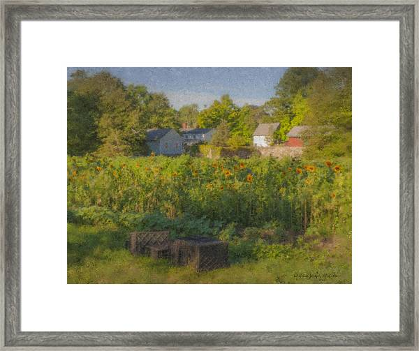 Langwater Farm Sunflowers And Barns Framed Print