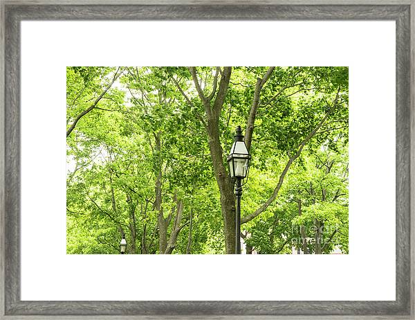 Lanterns Among The Trees Framed Print