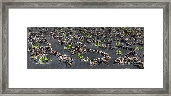 Lanzarote Vineyards Framed Print