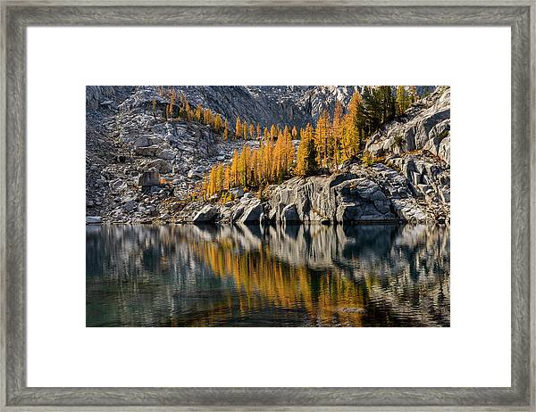 Larch Reflection In Enchantments Framed Print