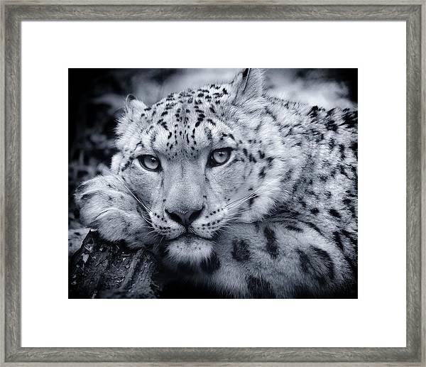 Large Snow Leopard Portrait Framed Print