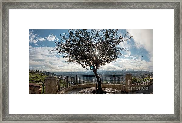 Large Tree Overlooking The City Of Jerusalem Framed Print