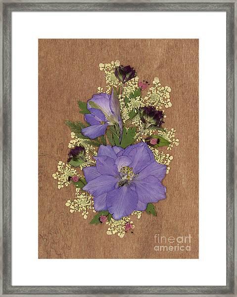 Larkspur And Queen-ann's-lace Pressed Flower Arrangement Framed Print
