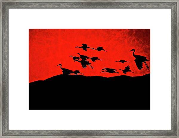 Last Light, Sandhill Cranes, Bosque Del Apache, Nm Framed Print