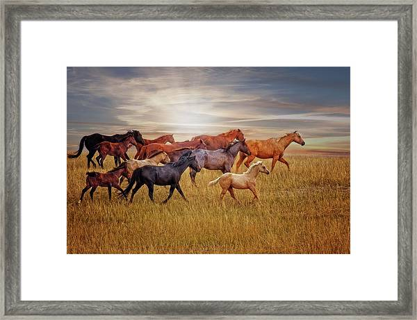 Last Light's Run Framed Print