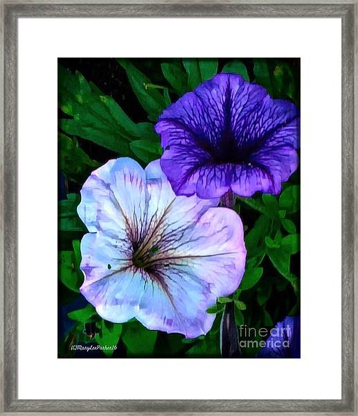 Last Of The Petunias   Framed Print