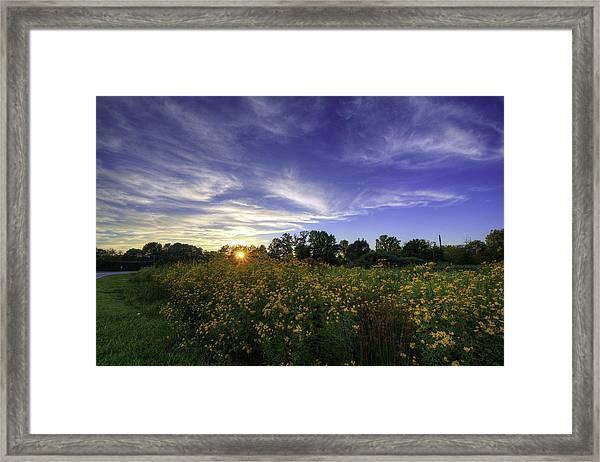 Last Rays Over The Flowers Framed Print