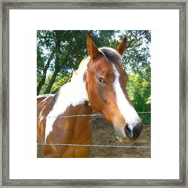 Last Week, I Met My First #horse! She Framed Print