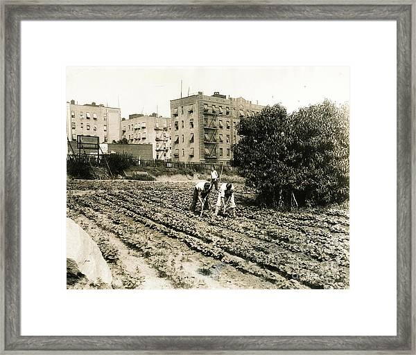 Last Working Farm In Manhattan Framed Print