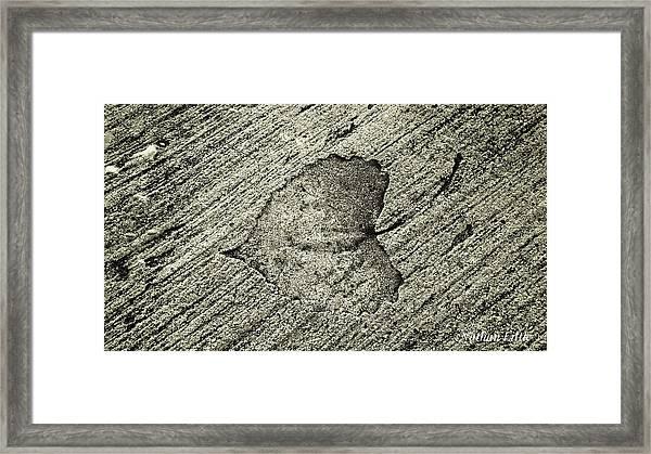 Lasting Impression  Framed Print