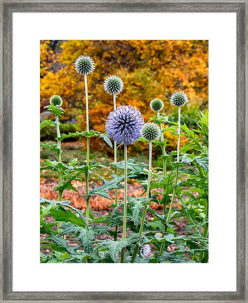 Late Bloom Among Fall Colors Framed Print