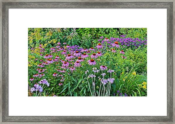 Late July Garden 2 Framed Print