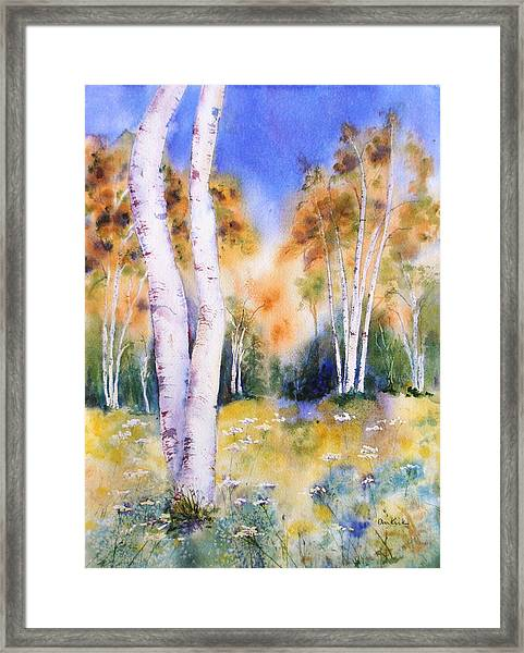 Late Summer Birches Framed Print
