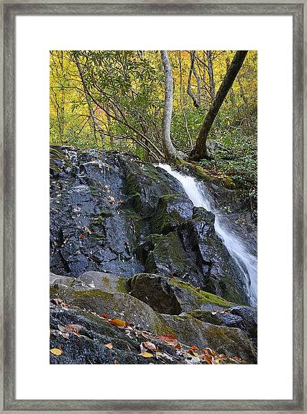 Laurel Falls Great Smoky Mountains National Park Framed Print