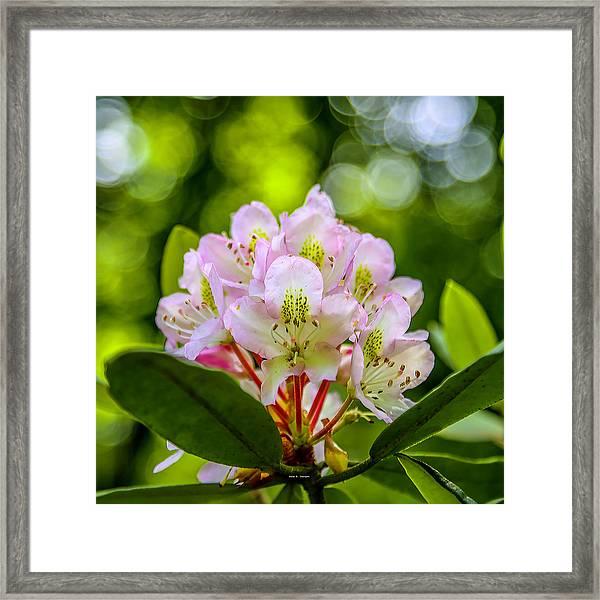 Laurel Gems Framed Print