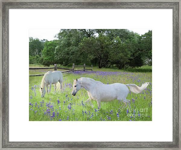 Framed Print featuring the digital art Lavender Pastures by Melinda Hughes-Berland
