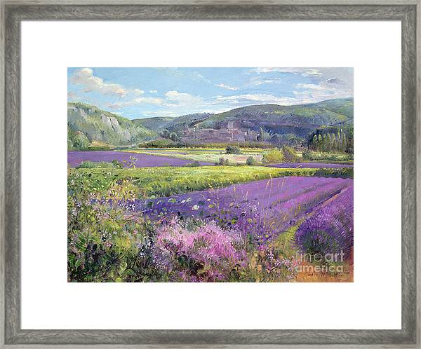 Lavender Fields In Old Provence Framed Print