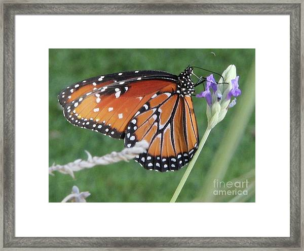 Lavender Lunch Framed Print