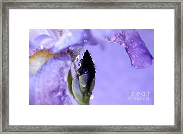 Lavender Rain Framed Print