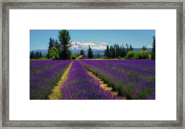 Lavender Valley Farm Framed Print