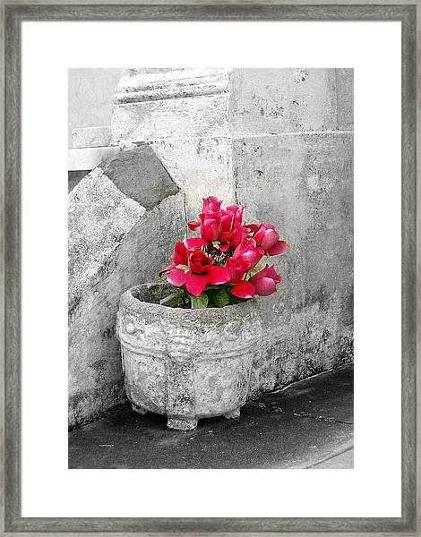Layfayette No One Red Roses Framed Print by Heather S Huston