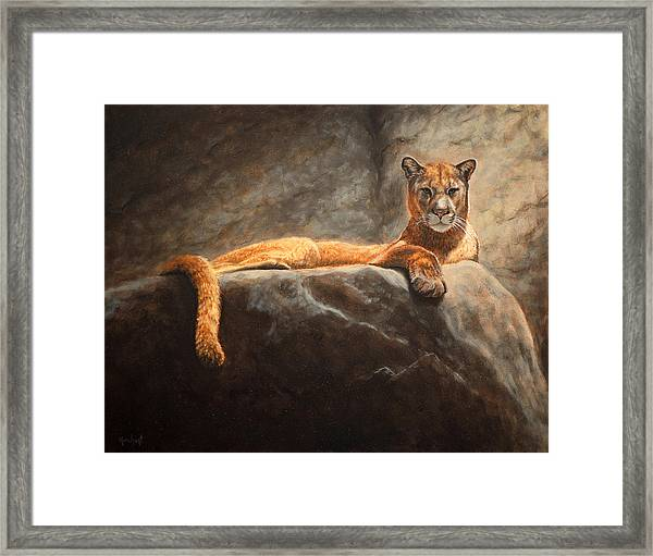 Laying Cougar Framed Print