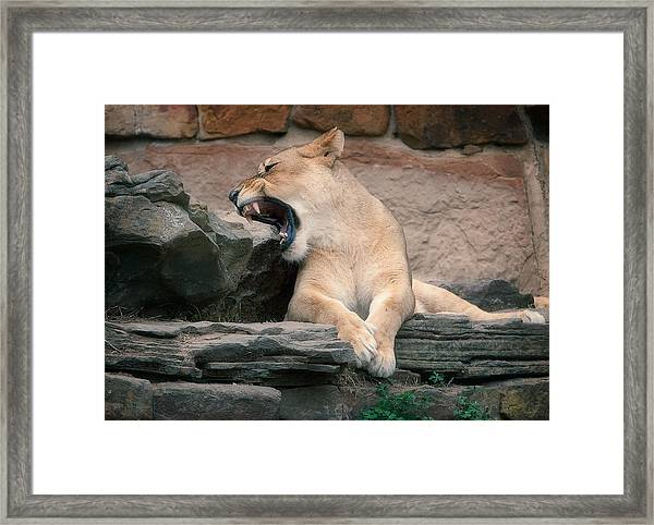 Lazy Day Framed Print