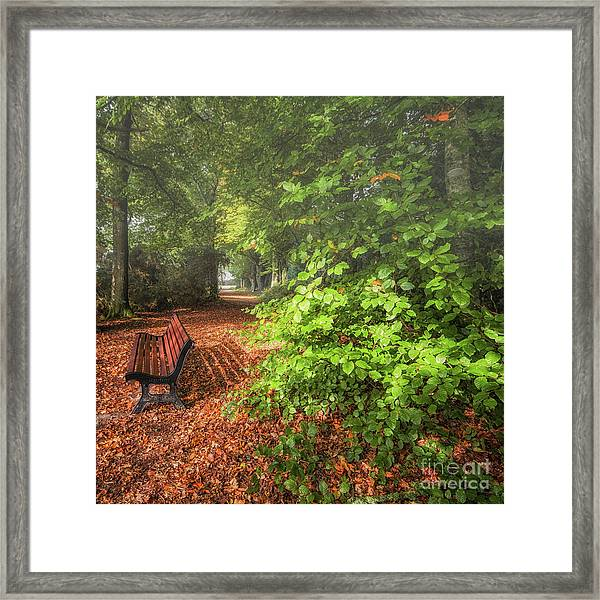 The Abbey's Bench Framed Print