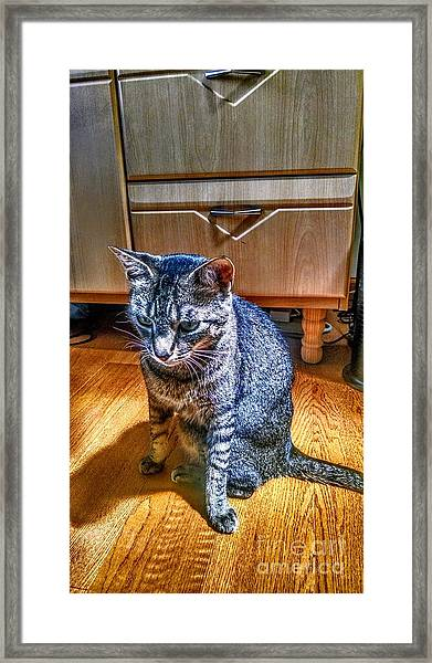 Le Chat Gris Framed Print