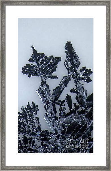 Lead Crystal Framed Print