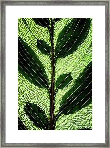Leaf Detail Framed Print