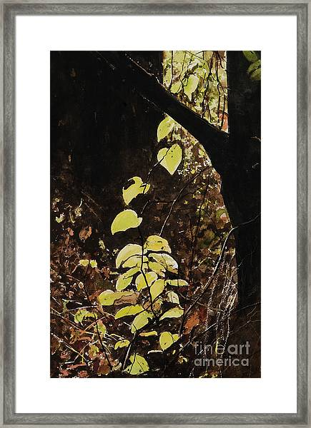 Leaf Glow Framed Print by Carla Dabney